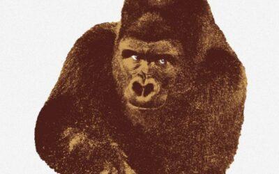 Quindici Il Gorilla Danese stampa serigrafia Enzo Mari